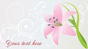 Vector card with pink lily Stock Photography