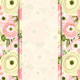 Vector card with pink and white ranunculus flowers. Royalty Free Stock Photos