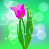 Vector card with red tulip on light green bokeh Stock Images