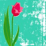 Vector card with red tulip on textured background. Template for Easter promotion, flower shop gift card, thank you note, spring sale coupon or wedding Stock Photos
