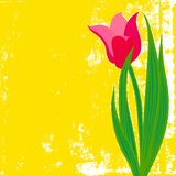 Vector card with red tulip on textured background. Stock Images