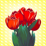 Vector card with red tulips Stock Images
