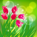 Vector card with red tulips on light green bokeh Royalty Free Stock Photography