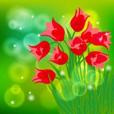 Vector card with red tulips on light green bokeh Stock Photography