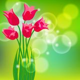 Vector card with red tulips on light green bokeh Royalty Free Stock Photo