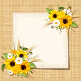 Vector card with sunflowers, daisy and ears of wheat on a sacking background. Eps-10. Stock Image