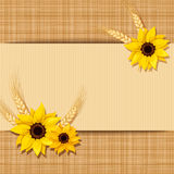 Vector card with sunflowers and ears of wheat on a sacking background Royalty Free Stock Photo
