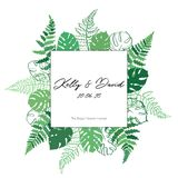 Vector card template with fern and monstera. Vector template illustration with fern and monstera leaf. Isolated outline modern drawing of tropical plant.. Card Stock Photography