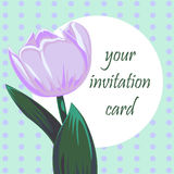Vector card with tulip Royalty Free Stock Images