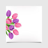 Vector card with tulip flowers. Eps-10. Vector white card with pink and purple tulip flowers Royalty Free Stock Photo