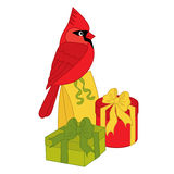 Vector Cardinal with Gifts Stock Images