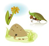 Vector cartoon ants Stock Image