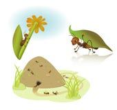 Vector cartoon ants Stock Image