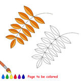 Vector cartoon ash leaf to be colored. Royalty Free Stock Photography