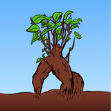 Vector cartoon bonsai Stock Images