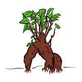 Vector cartoon bonsai Stock Image