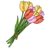 Vector Cartoon Bouquet of Color Tulips. On White Background royalty free illustration