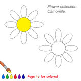 Vector cartoon camomile to be colored. Coloring book for children Stock Photography