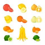 Vector cartoon Citrus set. Icons isolated fruits stock illustration