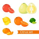 Vector cartoon Citrus set. Icons isolated fruits royalty free illustration