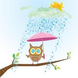 Vector cartoon cute little owl bird on tree branch Stock Photography