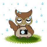 Vector cartoon designs of owl bored from rainfall. Designs of brown owl among rain Stock Image