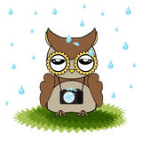 Vector cartoon designs of owl bored from rainfall. Designs of brown owl among rain Royalty Free Stock Images