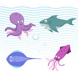 Vector cartoon different sea and ocean animals set. Octopus, stingray, shark, cuttlefish. Stock Images