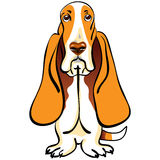 vector Cartoon Dog Basset Hound breed Stock Photo