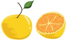 Vector cartoon fresh ripe orange with leaf. Stock Images
