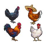 Vector sketch hand drawn chicken set isolated. Vector cartoon hand drawn sketch chicken set. Brown blue, white colored rooster, cock, dark blue colored, brown Royalty Free Stock Image