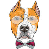 Vector cartoon hipster dog American Staffordshire Terrier Royalty Free Stock Photography