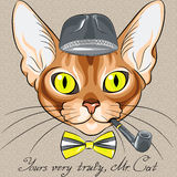 Vector  cartoon hipster red cat Abyssinian breed Stock Photos
