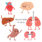 Vector cartoon human anatomy. Set  of healthy liver, heart. Cartoon human organs. Vector set. Healthy and strong cute liver, heart, brain, lungs, kidneys and Stock Images