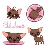 Vector Cartoon Illustration of a Cute Chihuahua Stock Photography