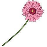 Vector Cartoon  Illustration - Pink Gerberas Stock Image