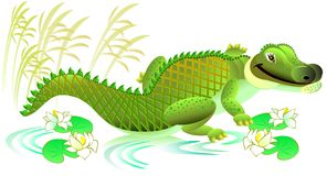 Illustration of cheerful toy crocodile on white background. Stock Image