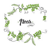 Vector with cartoon peas and calligraphic elements. Royalty Free Stock Images