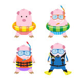 Vector 4 Cartoon Pigs in Summer Clothes for Sea Travel Stock Photos