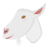 Vector cartoon portrait of small goat. Vector cartoon portrait of small white goat. Vector eps format 10 is available Stock Photography