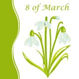 8 of March Women`s day Holiday Card with Snowdrop. Vector cartoon snowdrop spring flower card devoted to the 8 of March - international Women`s day holiday Stock Images