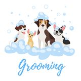Dogs in soap foam. Vector cartoon style illustration of dogs of different breeds in soap foam. Grooming concept royalty free illustration
