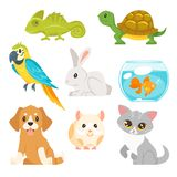 Set of home animal pet Royalty Free Stock Photos