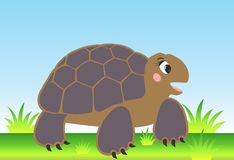 Vector cartoon turtle. On the meadow Stock Image