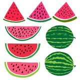 Vector cartoon watermelon fruit illustration. Slice. And whole isolated Stock Image