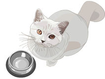 Vector Cat asks to eat. British lilac cat sits in front of an empty bowl and looks up Stock Photography