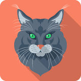 Vector Cat Maine Coon icon flat design Stock Photos