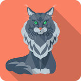 Vector Cat Maine Coon icon flat design Stock Photography