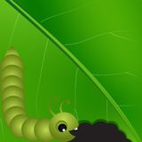 Vector caterpilar on green leaf macro background. Stock Photography