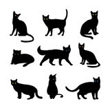 Vector cats royalty free illustration